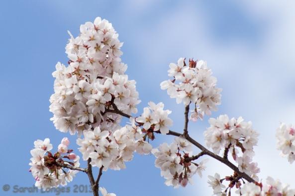Blossom on a Blue Sky