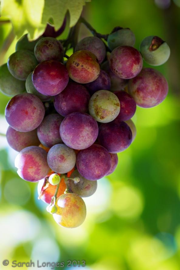Taste Of Autumn: Grapes
