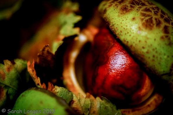 Taste Of Autumn: Horse Chestnut