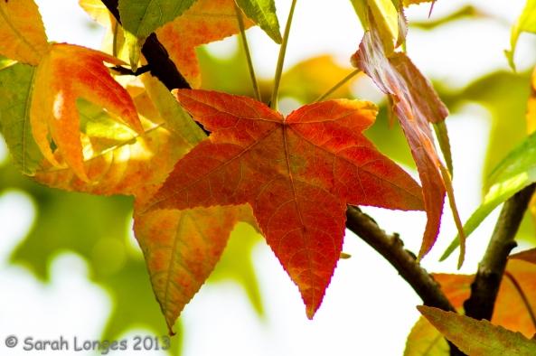 Taste Of Autumn: Maple