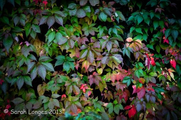 Taste Of Autumn: The Turn
