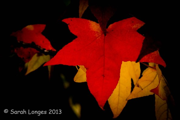Taste Of Autumn: A Study In Scarlet