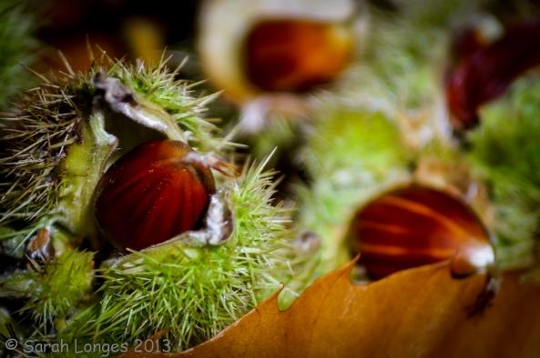 Taste Of Autumn: Sweet Treat
