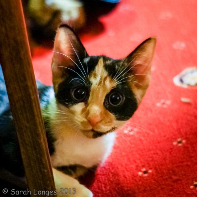 Meet The Kittens!