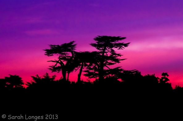 Sunset On Cedars