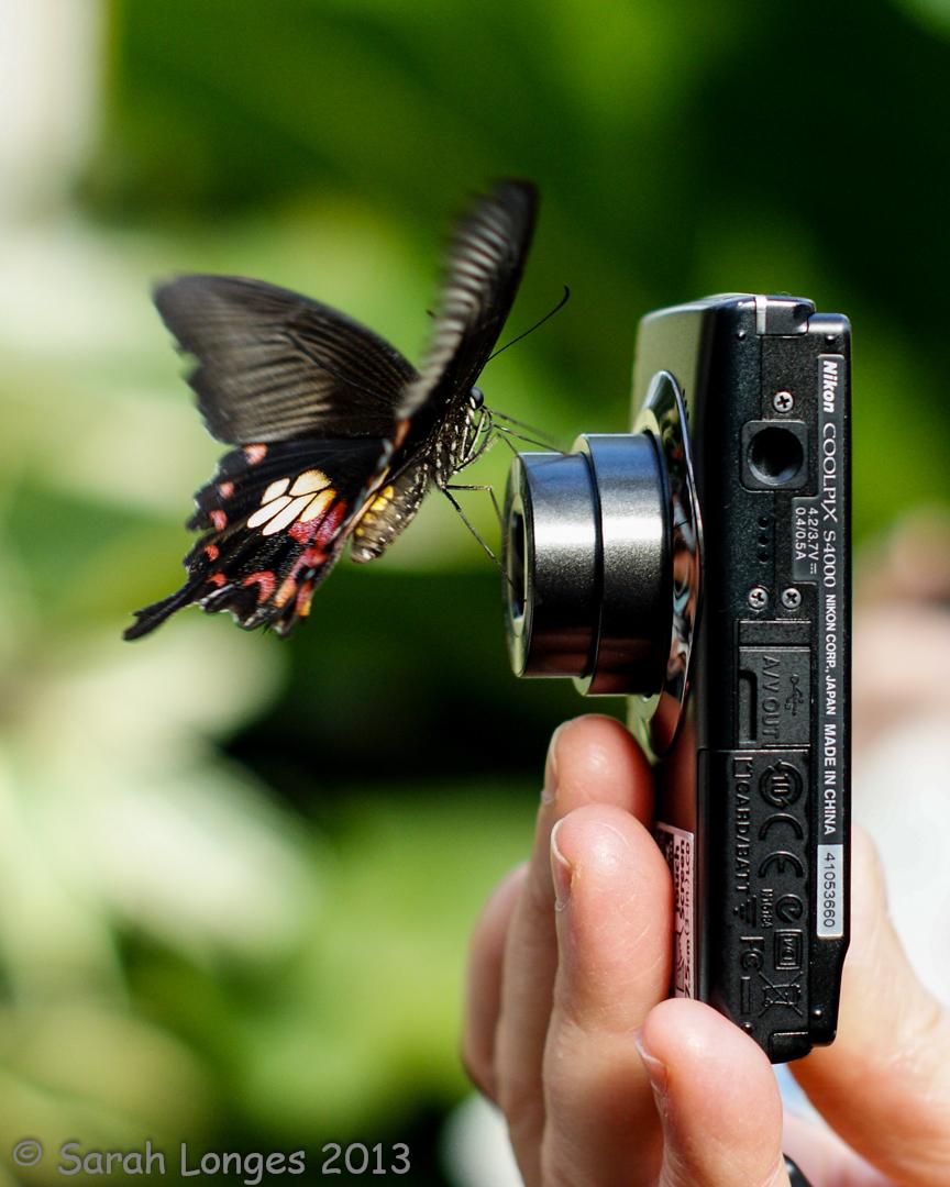 RHS Wisley Gardens: Butterflies In The Glasshouse
