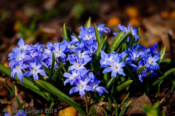 Blue Monday - Happy Spring!