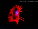 Snail Cell