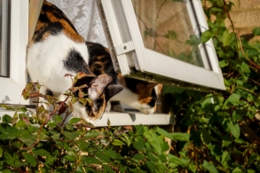 Investigating the rose bush