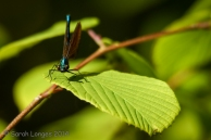 Damselfly head on