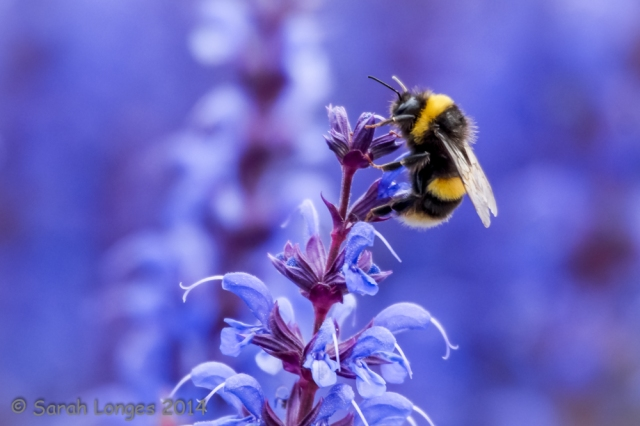 Blue Monday: Busy Bee