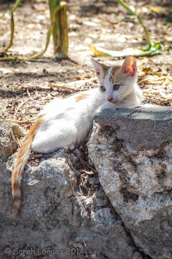 Kitten in Rhodes