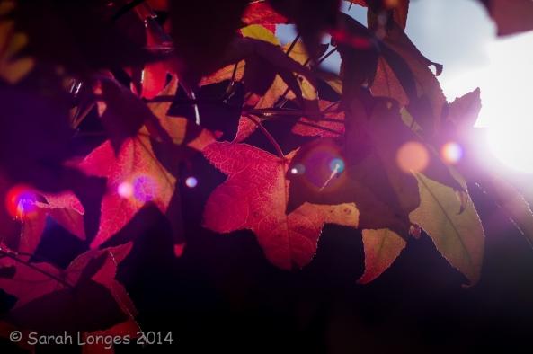 Light Through Leaves