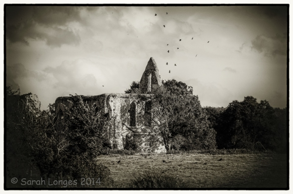 Newark Priory with circling birds