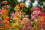 Plant Portraits: Primrose