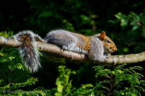 Wildlife in the Garden: Sunbathing