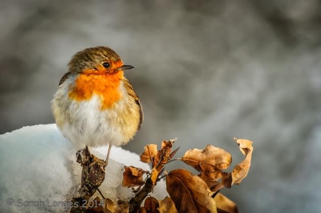 Wildlife in The Garden: The Lookout