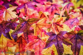 Seasons: Autumn Glory