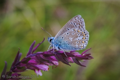 Wildlife in the Garden: Beautiful Blue