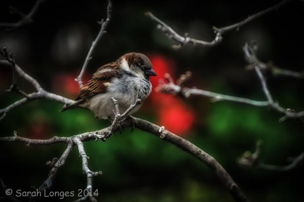Sleepy Sparrow