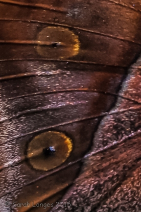 The details of the Indian Leafwing's wing