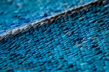 Even closer the iridescent scales on the wing