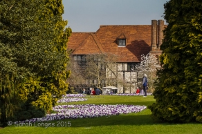 Early Spring at RHS Wisley Gardens