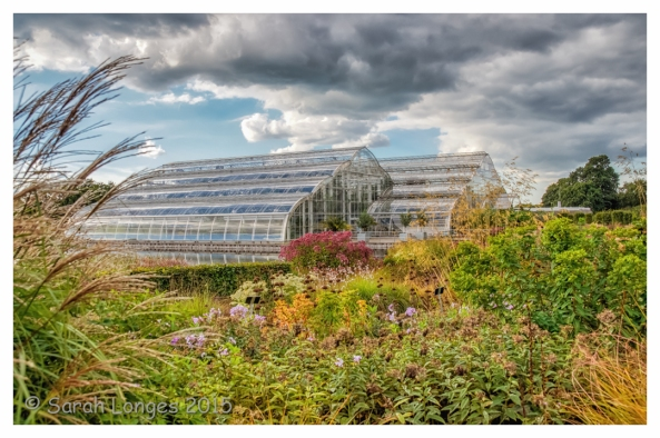 Autumnal Glasshouse