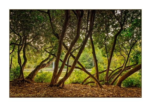 Claremont Gardens