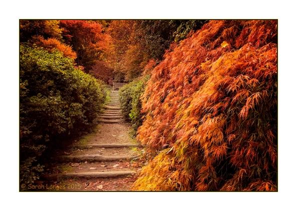 Stairway Through Heaven