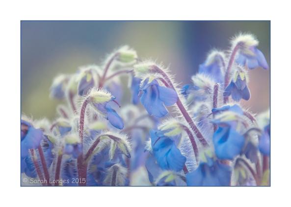 Alpine Blues
