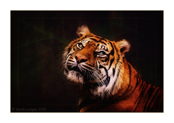 Tigers Of Memory