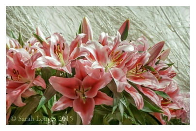 Lilies at Igloo Florists