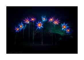 Blue Flowers at night