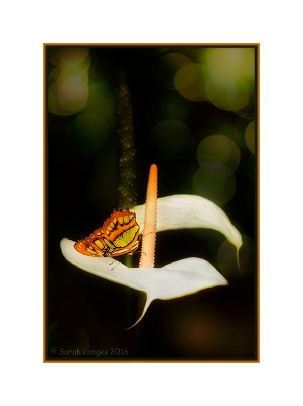 Malachite Photomontage