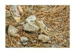 Lizard at Agios Iannos