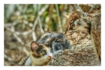Kitten and peahen at Plaka