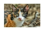 Kitten at Plaka