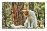 One of the many happy cats of Plaka