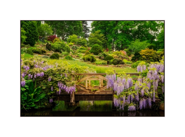 Wisteria Bridge and Rock Garden