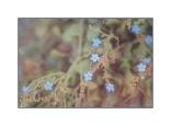 Pale Blue Wildflowers
