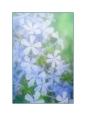 Pastel Blue Blooms