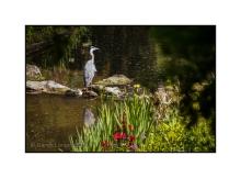 Heron by the Serpentine Waterfall