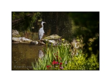 Heron by the Serpentine Waterfall