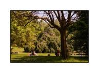 Tree Top Picnic