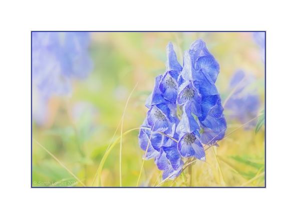 Wintry Blues in Autumn