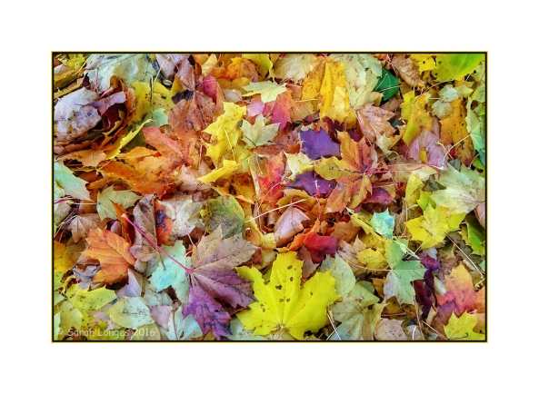 Autumn Leaf Pile