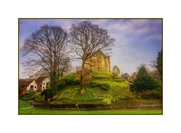 Guild Castle surrounded by daffodils
