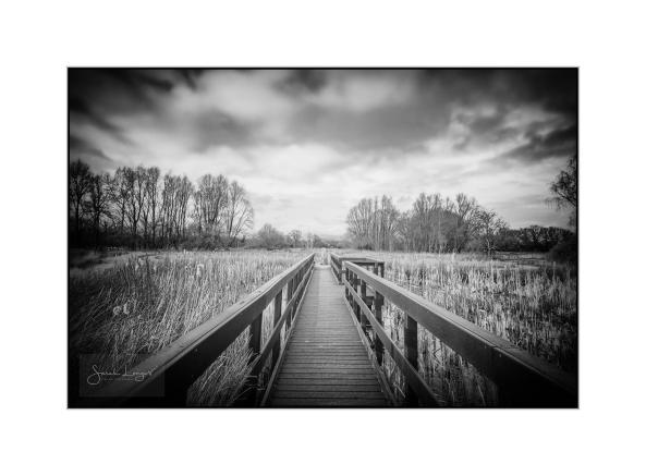 Walkway Over The Wetlands