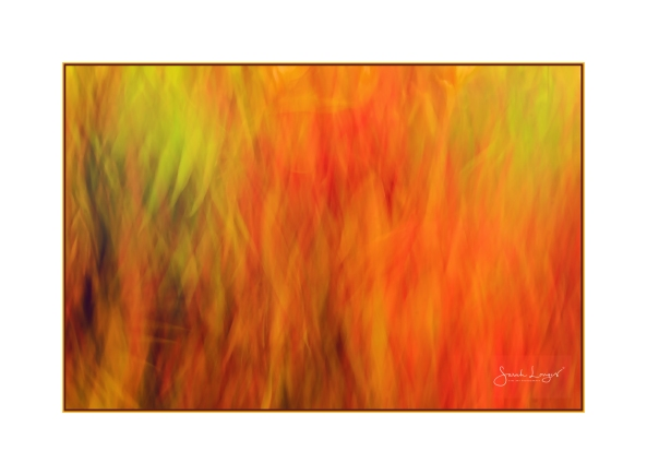 Autumn Leaf Cascade ICM